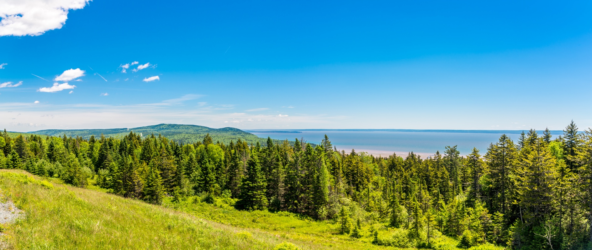 The shore of new Brunswick with the ocean in the background and evergreen trees in the foreground